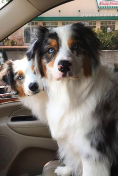Holidae & Bailey Aussies Aussies and Krispy Kreme does it get better than that!!!!