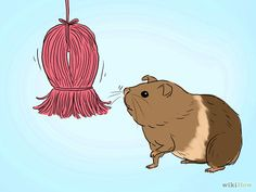 Make a Dangling Guinea Pig Toy Step 12.jpg
