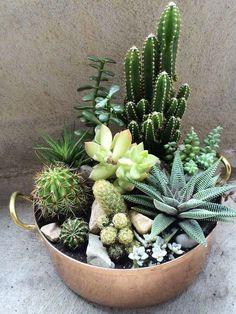 Indoor Cactus Garden, Succulent Gardening, Succulent Terrarium, Cacti And Succulents, Planting Succulents, Cactus Plants, Planting Flowers, Succulent Ideas, Indoor Gardening