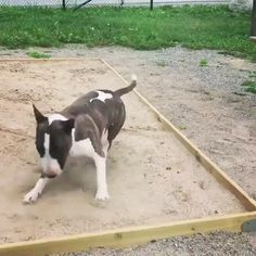 Reassure somebody of this thug [GIF] Cute Funny Dogs, Cute Funny Animals, Cute Baby Animals, Animals And Pets, Funny Kitties, Adorable Kittens, Kitty Cats, Cute Animal Videos, Funny Animal Pictures