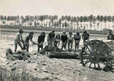 #Mondine sorridenti nelle #risaie, nonostante il duro #lavoro sotto il sole. #Lomellina #riso #storia #tradizioni #turismo