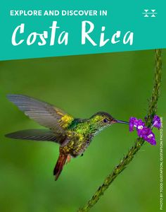 Rufous-tailed Hummingbirds are one of the 50 species of hummers you can spot in Costa Rica.
