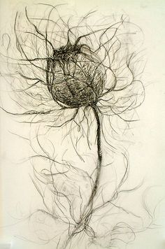 drawing, Love in the Mist seed pod. rohini devasher 'love-in-the-mist', offset lithograph, x 2005 Plant Drawing, Painting & Drawing, Drawing Artist, Drawing Flowers, Botanical Drawings, Botanical Art, Drawing Sketches, Art Drawings, Crayon
