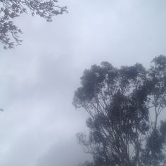 Cloud cover for the moment. But also windy. #sky #tree #nature #mindfulafternoon