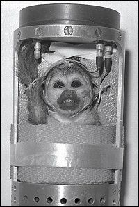 .Miss Baker, a squirrel monkey, is tucked inside her capsule and ready to launch into space aboard a Jupiter missile. She traveled into space on May 28, 1959, along with Able, an American-born rhesus monkey.