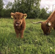 Cute Baby Animals Try Not To Aww both Cute Baby Animals With Funny Quotes also Cute Animals Baby Images down Cute Pictures Of Animals Easy To Draw Cute Creatures, Beautiful Creatures, Animals Beautiful, Cute Little Animals, Cute Funny Animals, Farm Animals, Animals And Pets, Wild Animals, Fluffy Cows