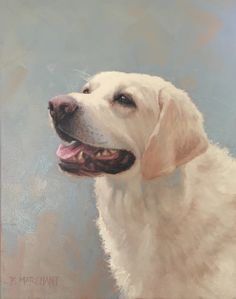 Bruce by Beth Marchant Oil Labrador Retriever, Paintings, Oil, Animals, Labrador Retrievers, Animales, Paint, Animaux, Painting Art