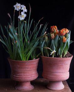 Terra Cotta pots by Frances Palmer