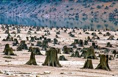 """Bosque nacional de Willamette, en Oregón (EE UU), deforestado. Solo el 1% de los valles y bosques —abundantes en robles— originales de esta zona que se extiende a lo largo de 240 kilómetros, han sobrevivido intactos al desarrollo, la urbanización, los incendios y al impacto de la agricultura, según indica la ONG WWF. Las imágenes son el vehículo utilizado en el libro para llamar la atención sobre los perjuicios al medio ambiente, pues """"los datos, aunque útiles, fallan al generar una…"""