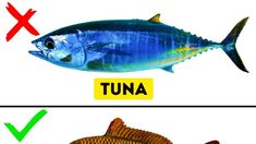 Types of fish to eat – A Selection of Pins about Animals Fish You Can Eat, Can Dogs Eat, Dangerous Fish, Animals Name In English, Fish Chart, Oscar Fish, Vitamins For Hair Loss, Wine Folly, Fish Pie