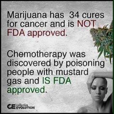 Cannabis VS Chemo