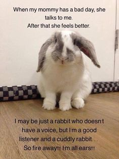 I have a Holland Lop bunny named Snoopy who is a cuddly friend for me and my… Lop Bunnies, Cute Baby Bunnies, Funny Bunnies, Cute Baby Animals, Funny Animals, Bunny Puns, Lionhead Rabbit, Pet Rabbit, Diy Pour Lapin