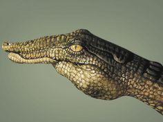 crocodile hands!