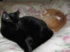 These are my cats, Pedro (black) and Fuzzles (orange). I Smile, Make Me Smile, Embroidery, Stitch, Orange, Cats, Fabric, How To Make, Animals