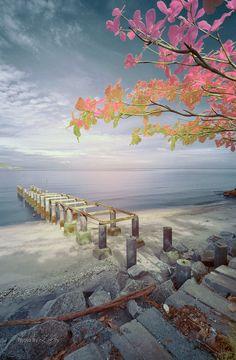 ~~Sakura & Old Path ~ Robina Beach, Butterworth Penang, Malaysia by Mohd Zaki Shamsudin~~