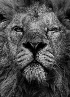 Rise and rise again until Lambs become Lions.