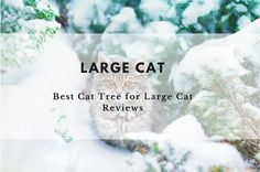 Which is the best cat tree for large cats? Read our reviews of five of the best cat trees and cat condos for large cats and found out which one came out on top!