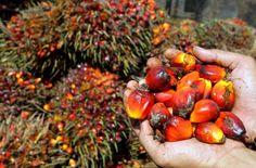 Uniamoci per dire NO all'olio di palma. Firma anche tu la petizione!
