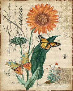 French Botanical-souci Mixed Media