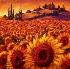 Wandering the Tuscan Sunflowers.