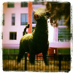Topiary Bull at the Marshall Center (: