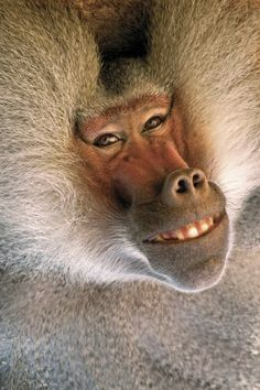 Baboon - wow - what a look on his face....makes you stop and think...why are we not protecting these wonderful beings....