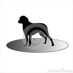 Black dog on a white background standing on four legs