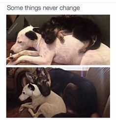 visit www.amazingdogtales.com for the best funny dog joke pics,inspirational dog stories and dog news.... doggo dumpin