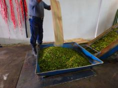 Olive Fabrik Kreta Griechenland (Presserei)