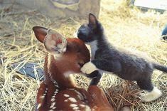 Interspecies Love - Cheezburger