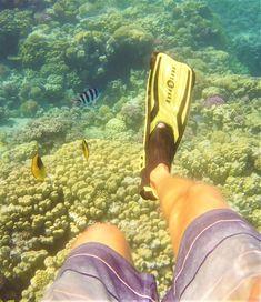 Fazsination Unterwasserwelt, Tauchen in der Makadi Bay, Tauchen im Roten Meer Ägypten, Hurghada Tauchen, Schnorcheln, Schnorcheln in Makadi, Unterwasser, Korallenriffe, Red Sea, Rotes Meer, Rotes Meer Ägypten #urlaub #unterwasser #tauchen #schnorcheln #diving #ägypten #hurghada #makadi #redsea #rotesmeer #meer #korallenriffe #fische #farben #faszination #wasser #erlebnis Red Sea, Coral Reefs, Snorkeling