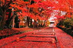 autumn in japan - Google Search