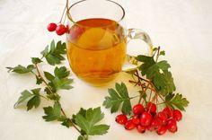 Боярышник при сахарном диабете 2 типа: полезные свойства растения для диабетика
