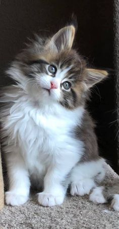 Cats And Kittens, Cute Cats, Animals, Pretty Cats, Animales, Animaux, Animal, Animais, Cats