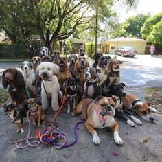 How adorable is this?!... The Happiest Pack Of Dogs In Town... Barkhaus, a doggie spa daycare in Miami, Florida.