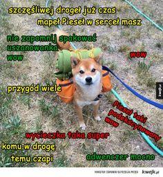 wakacyjny pieseł Doge Meme, Its Time To Stop, Toot, I Love Anime, Shiba, Best Memes, Animals And Pets, Einstein, Dog Cat