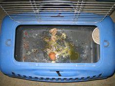 Egg bound Chicken Update