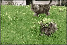 KITTY HUNGER GAMES!