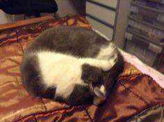 My cat - Kristy