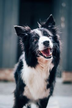 https://www.hellenia.co.uk/animal-health/dog.html  Man's best friend, as the saying goes. With a title like that, our dogs deserve to be kept in good health. Our supplements can help keep them in great shape. Find out more on our website.  Contact Us: Carlton House, Hallikeld Close, Barker Business Park, Melmerby, North Yorkshire, HG4 5GZ