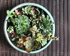 DIY Succulent Dish