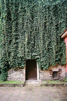 Vine growing on exterior of house.  It appears that the owners have allowed it to grow over the windows, shutting out all of the natural lighting.