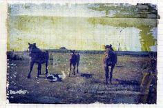 Polaroid transfer of horses
