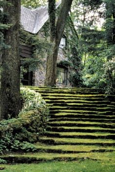 stone and grass stairway
