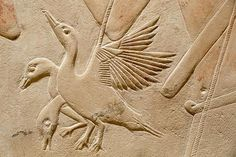 Tomb of Kagemni (detail - ducks), Teti cemetery, Sakkara, Ancien Egypt, 6th Dynasty.