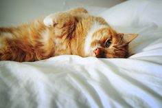 The Max-cat In Alluring Pose. By Notcatherinezeta