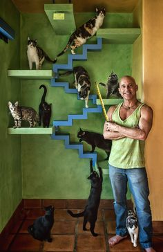 Man Builds Cat Paradise For His 22 Rescue Cats