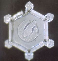 """What has put Dr. Emoto at the forefront of the study of water is his proof that thoughts and feelings affect physical reality. By producing different focused intentions through written and spoken words and music and literally presenting it to the same water samples, the water appears to """"change its expression"""". Essentially, Dr. Emoto captured water's 'expressions.'"""