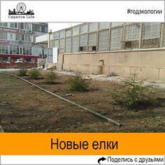 В Мирном переулке высадили новые елки взамен вырубленных Подробнее http://nversia.ru/news/view/id/103214 #Саратов #СаратовLife