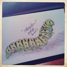 6.28.11: Caterpillar.